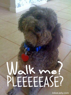 How could you look at that face and tell him you are not taking him for a walk?